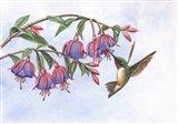 Fushia's Delight Art Print
