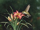 Ruby's Day Lily Art Print