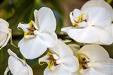 Exotic Orchid 02 Art Print