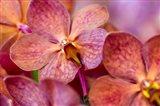 Exotic Orchid 05 Art Print