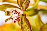 Exotic Orchid 10 Art Print