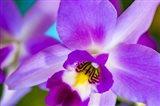 Exotic Orchid 11 Art Print