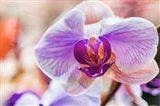 Orchid Vibrancy 5 Art Print