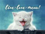 Live Love Meow Art Print