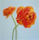 Orange Delight I Art Print