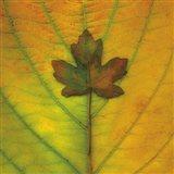 Leaf Inset Art Print