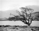 Connemara Tree I Art Print