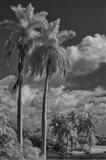 Eleven Palms Art Print