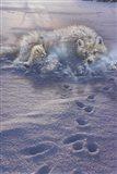 Arctic Tracks Art Print