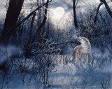 Minnesota Moon Art Print