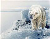 Polar Dawn Art Print