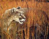 Prairie Marauder Art Print