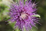 Purple Bloom Closeup Art Print
