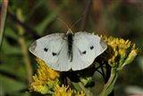 Yellow Flower And White Moth Art Print