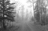Path Through Woods Black And White Art Print