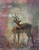 Africa Antelope Art Print