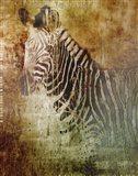 Africa Zebra Art Print