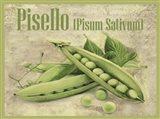 Pisello Pisum Sativum Art Print