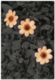 #6 Special Garden Art Print