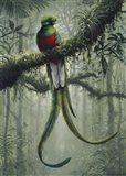 Resplendent Quetzal 2 Art Print