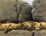 Two Lions Head To Head Art Print