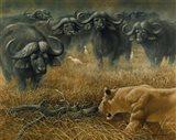 Lioness And Cape Buffalos Art Print