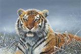 Tiger In Snow Art Print