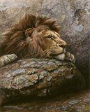 Lion Male 2 Art Print