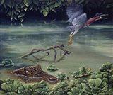 Caiman And Green-Backed Heron Art Print