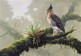 Ornate Hawk - Eagle Art Print