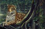 Jaguar By The River Art Print