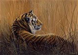 Tiger In Grass Art Print