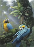 Blue And Yellow Macaws Art Print