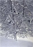 Snow Tree With Magpies Art Print