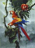 Red And Yellow Macaws Art Print