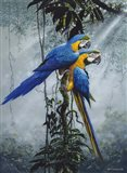 Blue And Yellow Macaws 2 Art Print