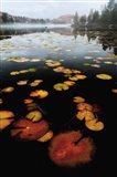 Lily Pad Colors Art Print