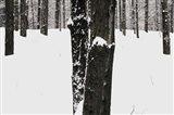 Snow Dusted Art Print