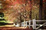 Autumn Moods Art Print