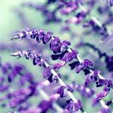 BC Pretty In Purple Art Print