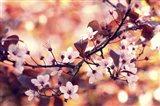 Colours Of Springtime Art Print