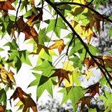 First Signs Of Autumn Art Print