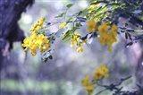 Yellow In Her Garden Art Print