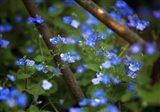 Blue Little Flowers Art Print