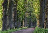 Light Green Forest Road Art Print