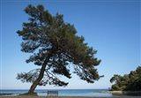 Tree At The Sea Art Print