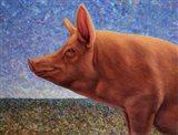 Free Range Pig Art Print