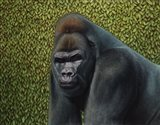 Gorilla With A Hedge Art Print