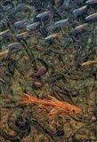 Aquarium 2 Art Print