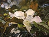 Magnolia Bloom 3 Art Print
